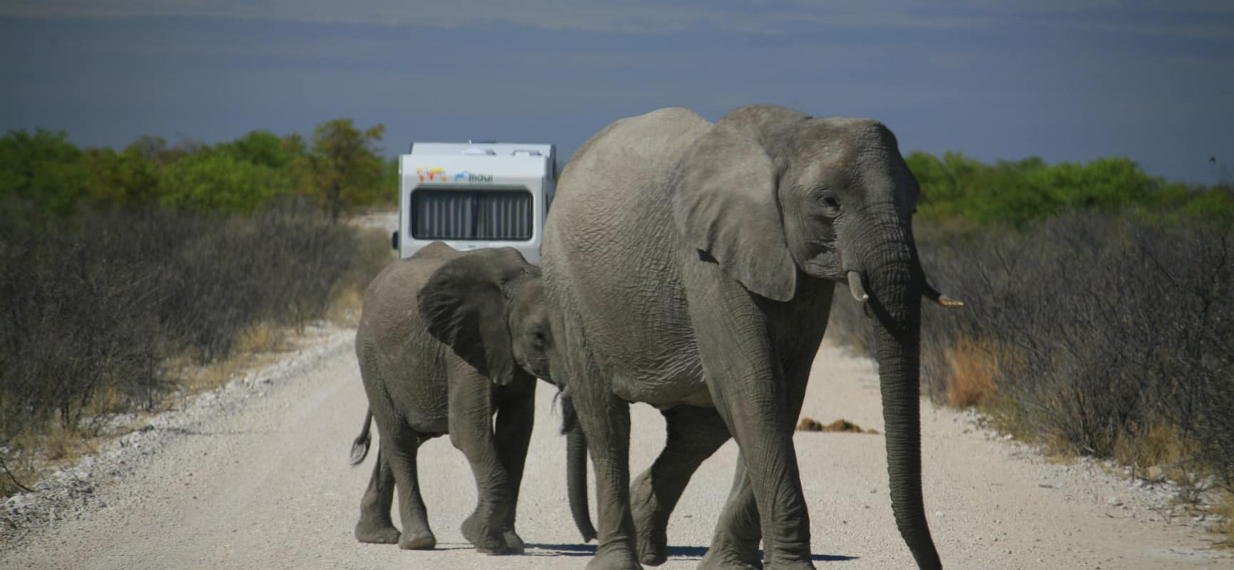 safari_camping_car